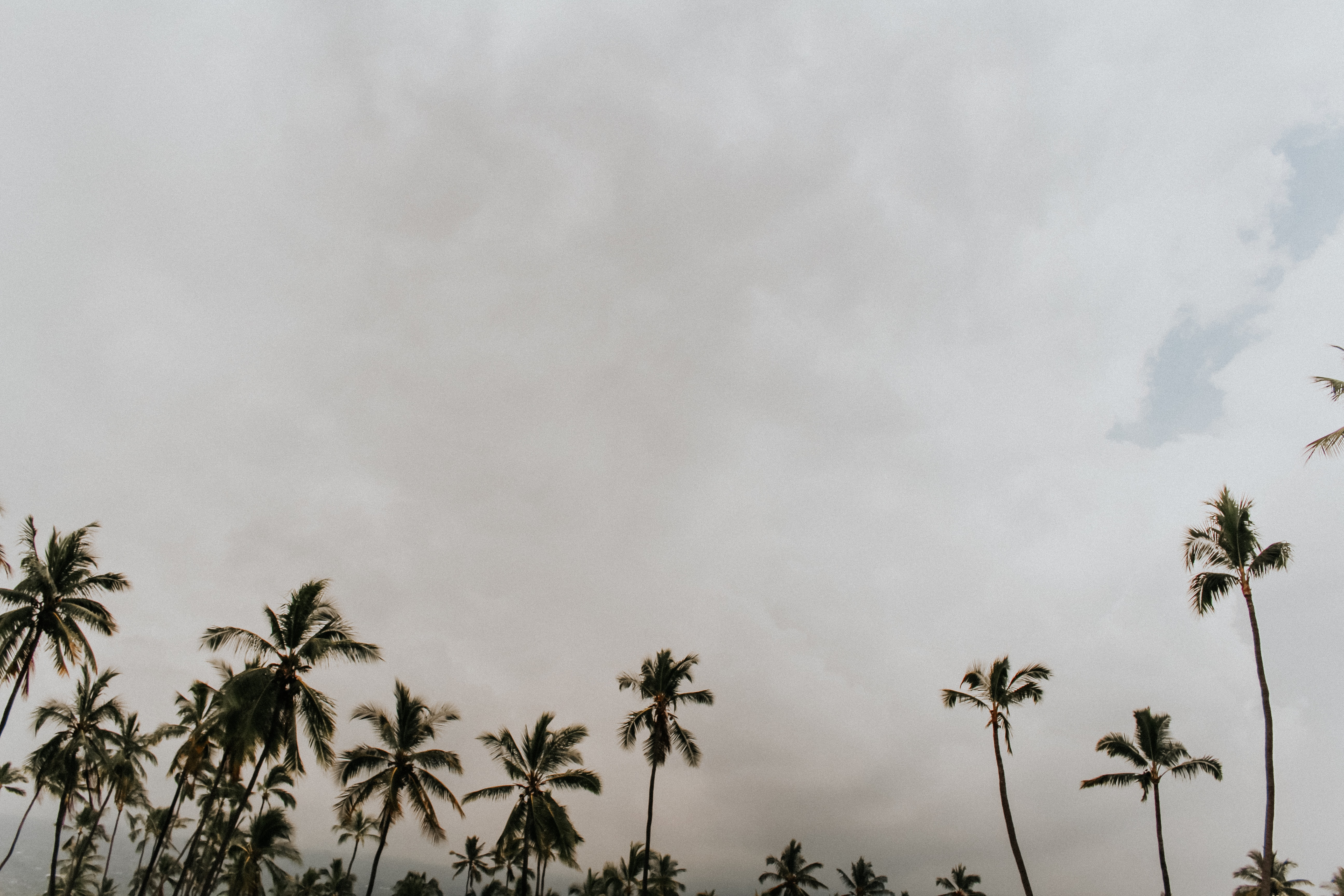 coconut trees under the cloudy sky during daytime