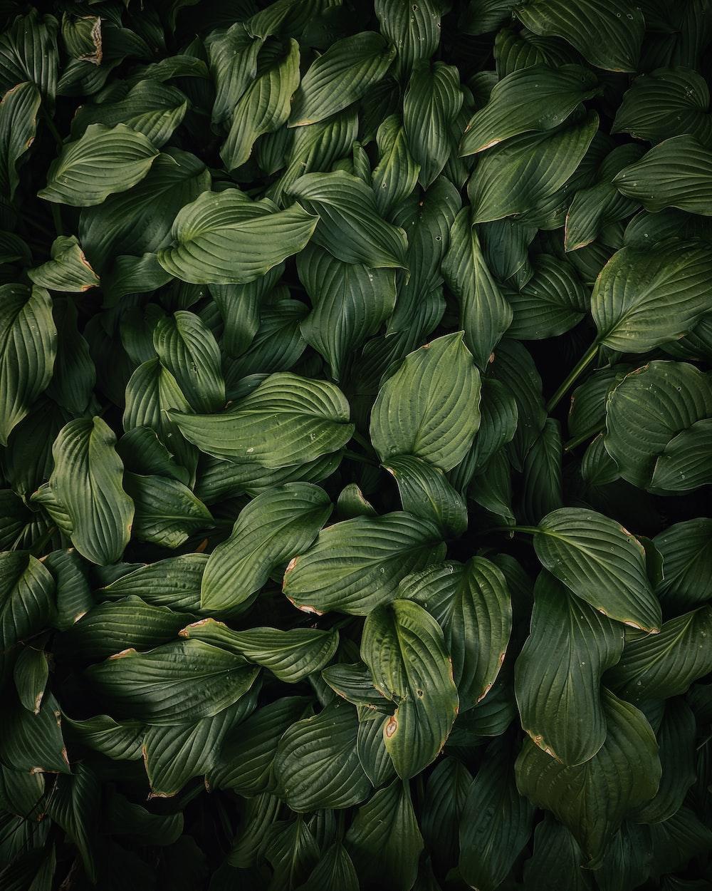green leafed plans