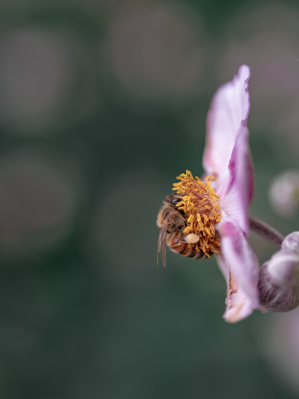 selective focus photography of bee in flower