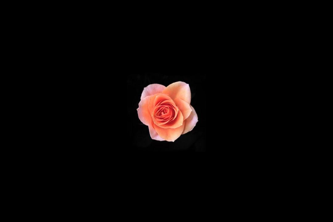 3969. Virágok