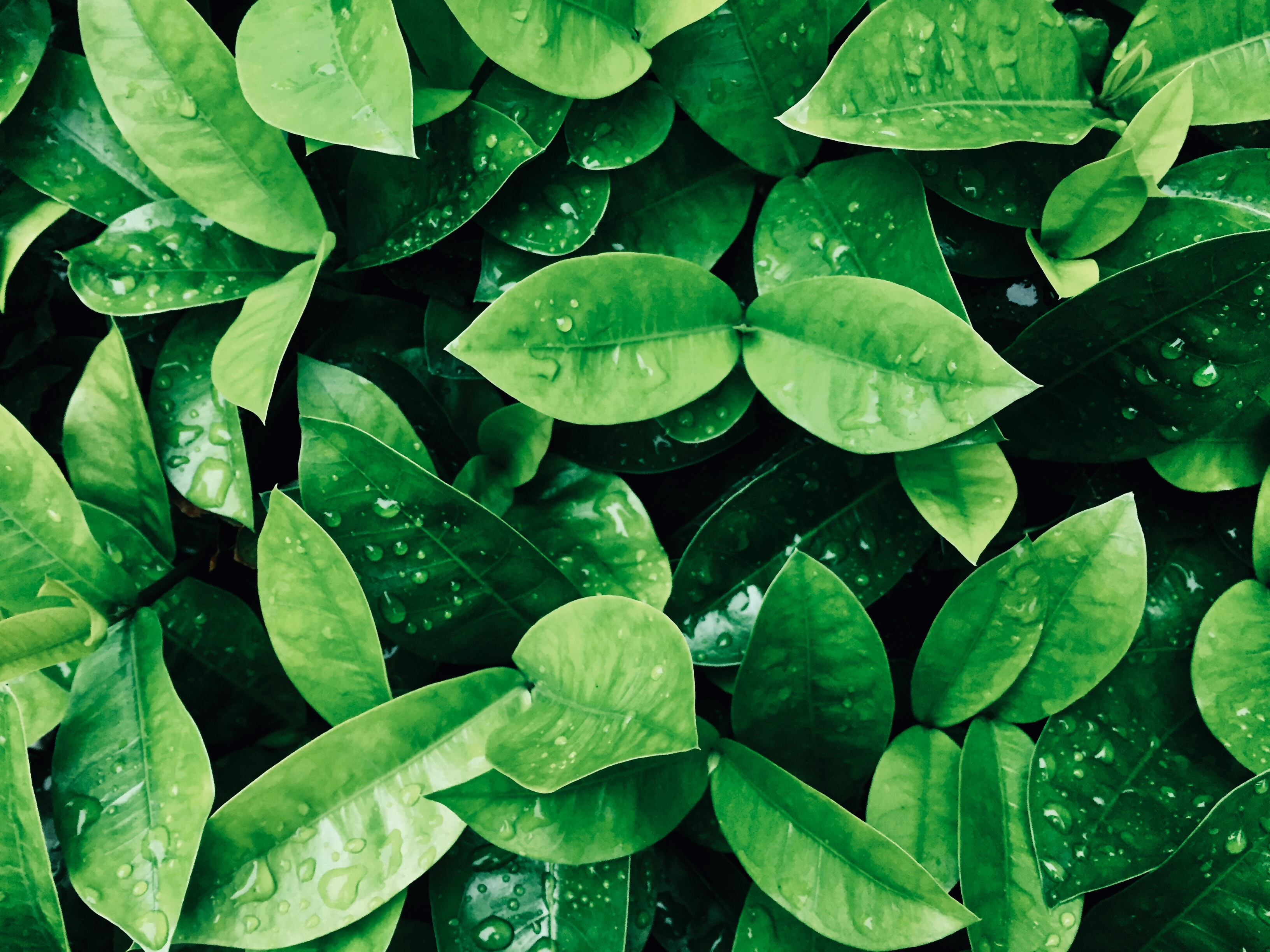 green leaf plant photography