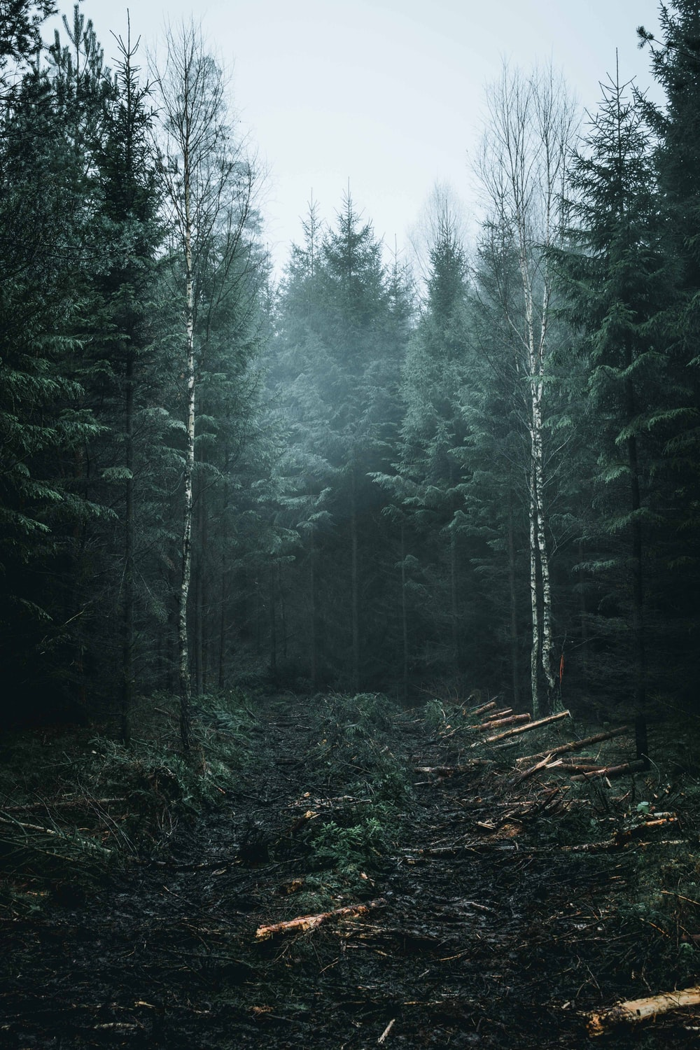 green forest under gray sky during daytime
