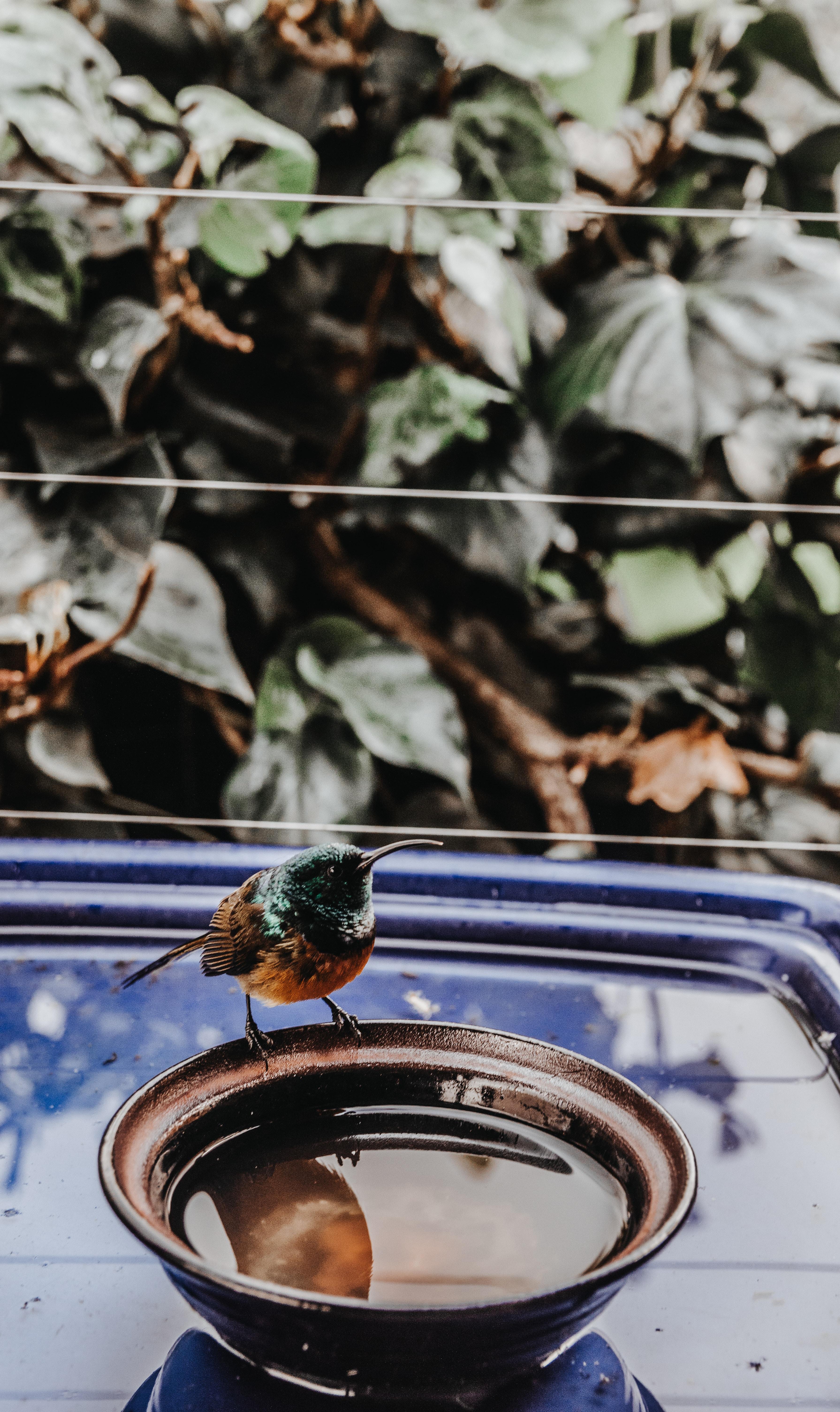 hummingbird perching on bowl
