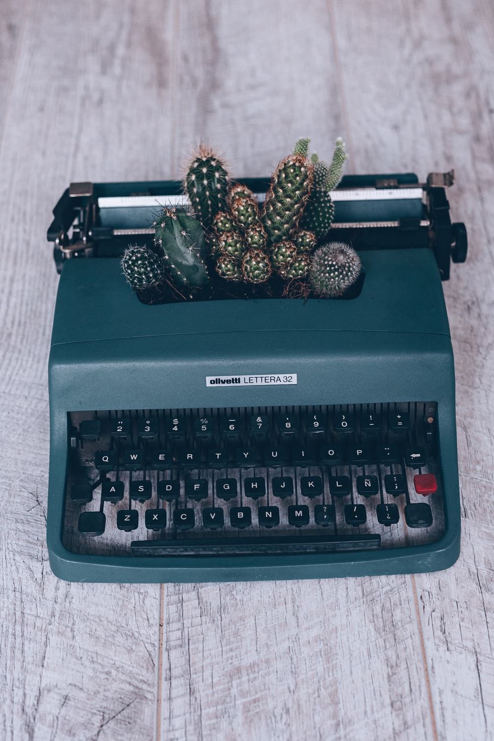 black and green Olympia typewriter and green cactus plant