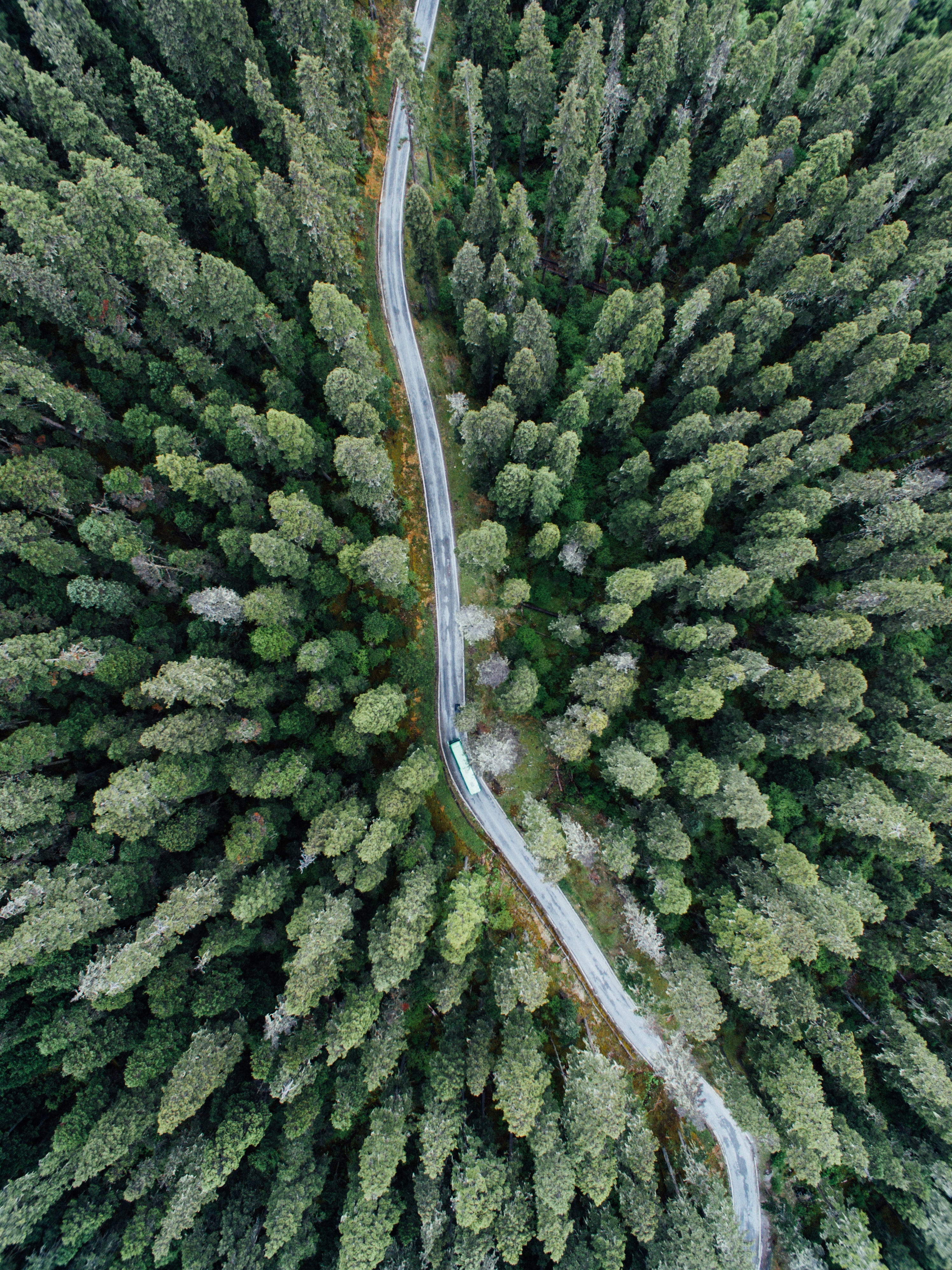 aerial photography of vehicle on road between trees