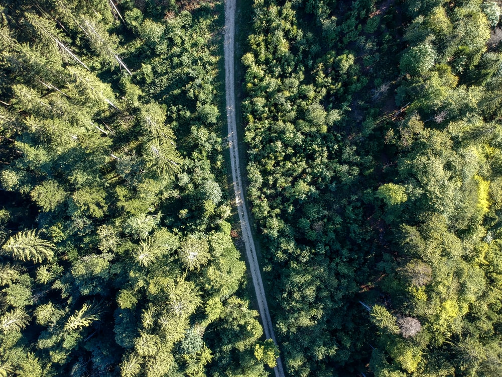 bird's-eye view photography of road between green forest