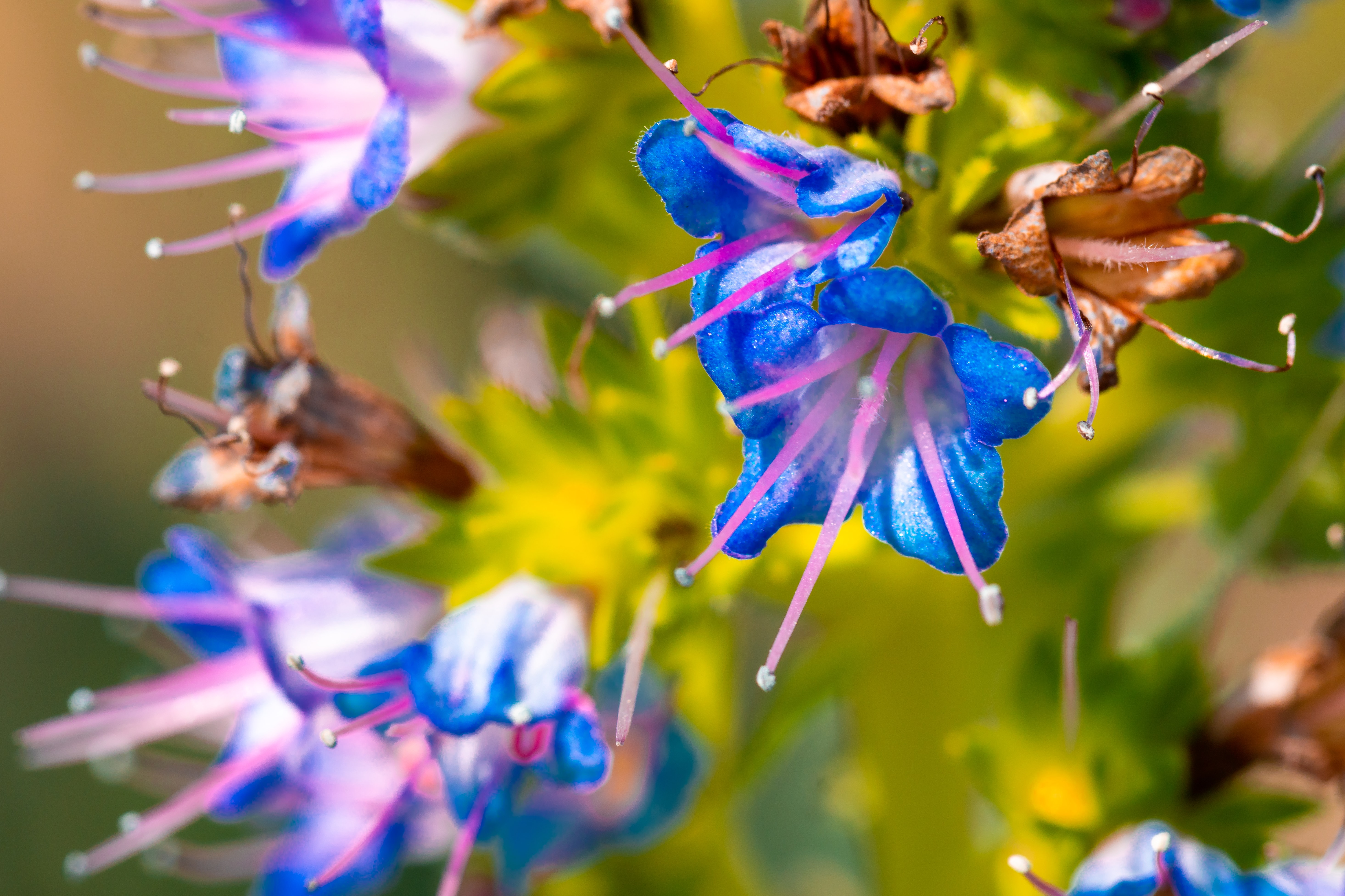 blue-and-pink petaled flowers