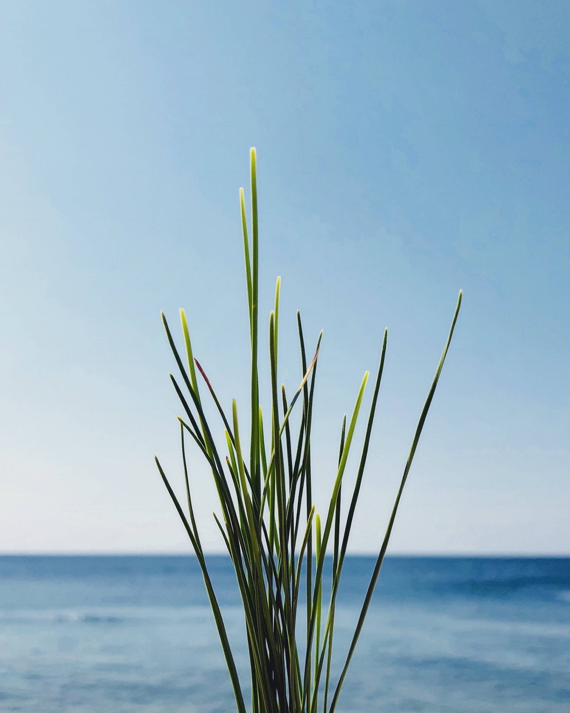 green plant near blue ocean under blue clear sky during daytime