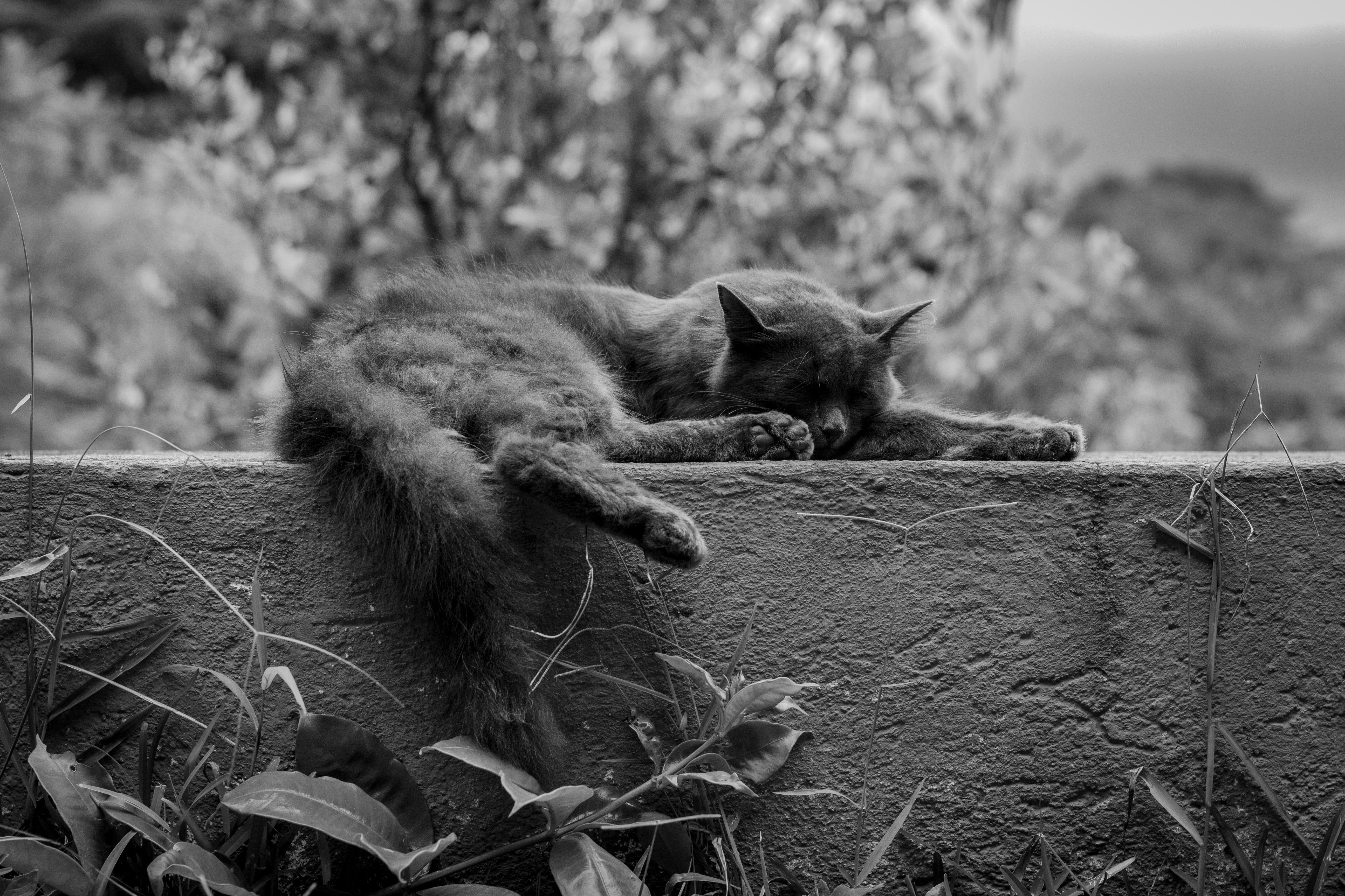 grayscale photo of cat animal on concrete wall