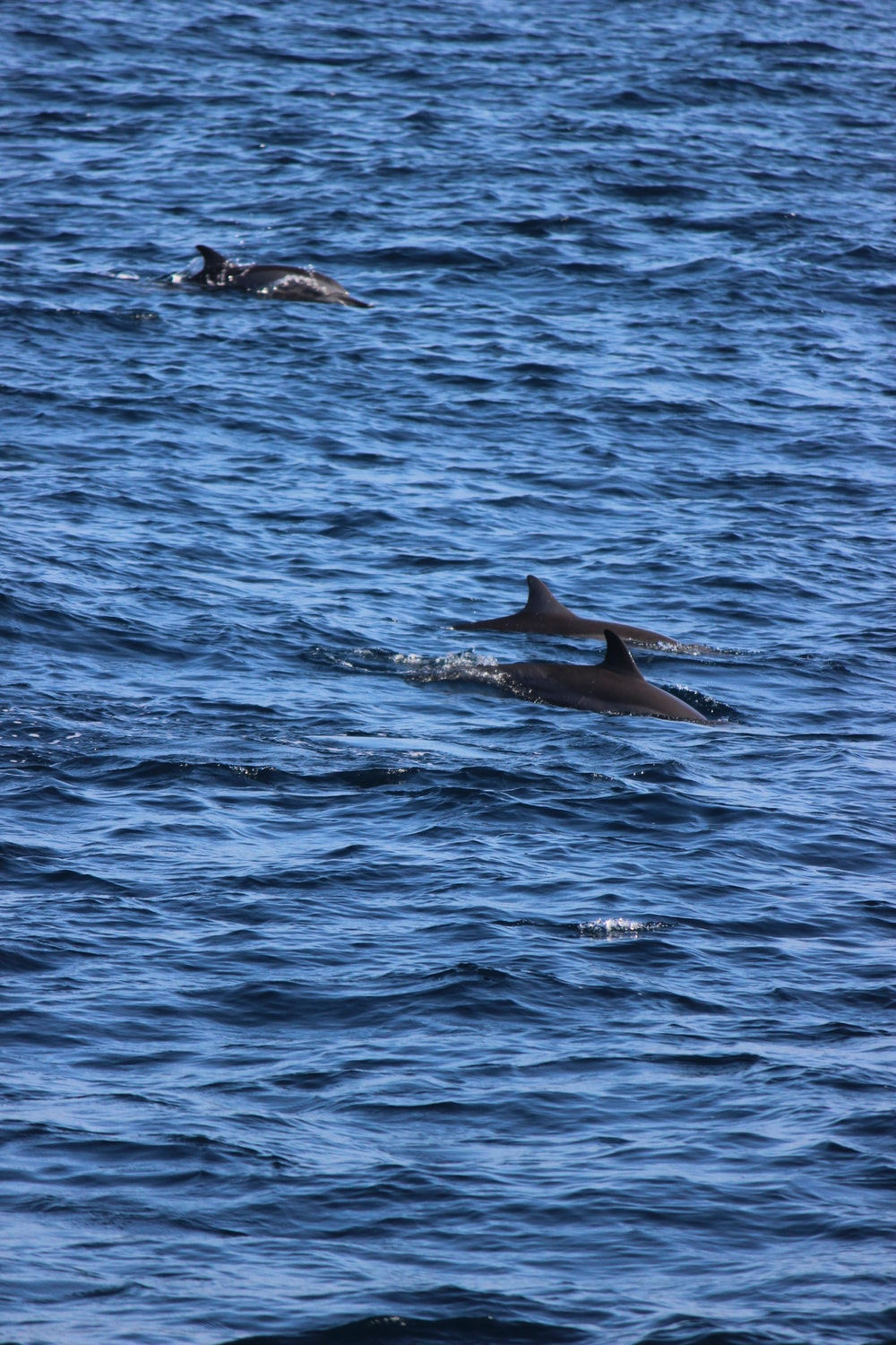 black dolphins on body of water