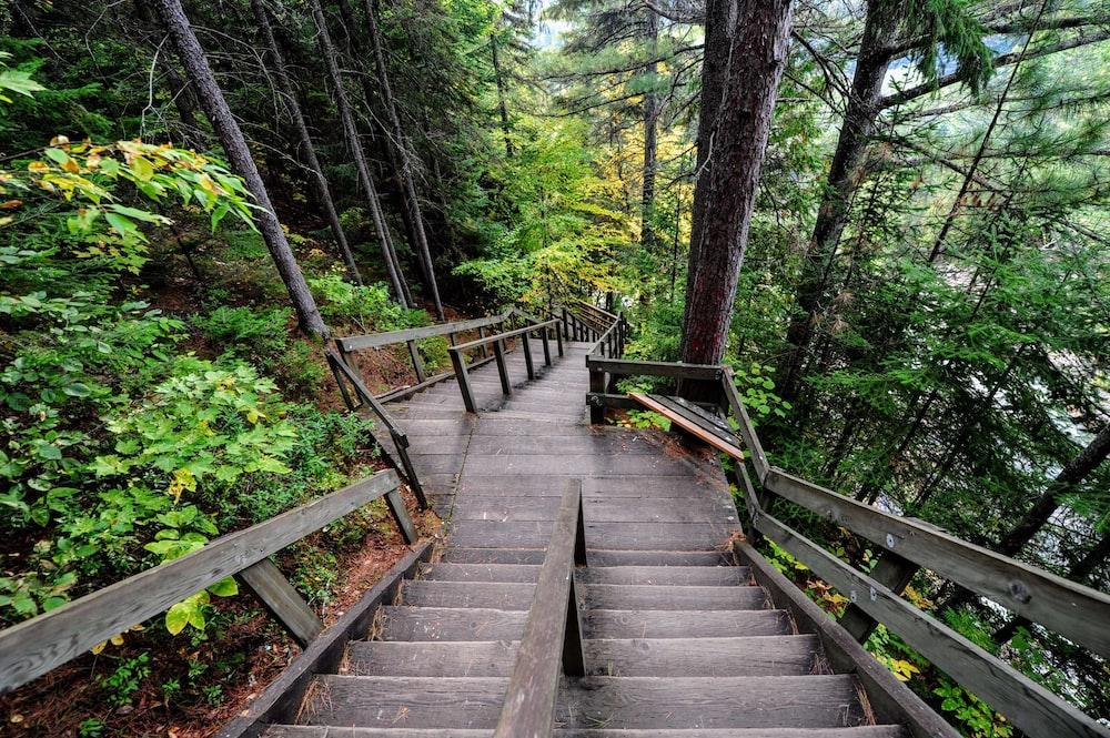 brown stair beside trees