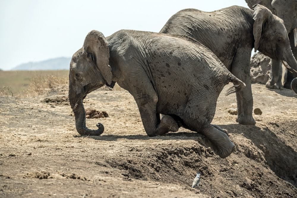 elephant climbing the mountain