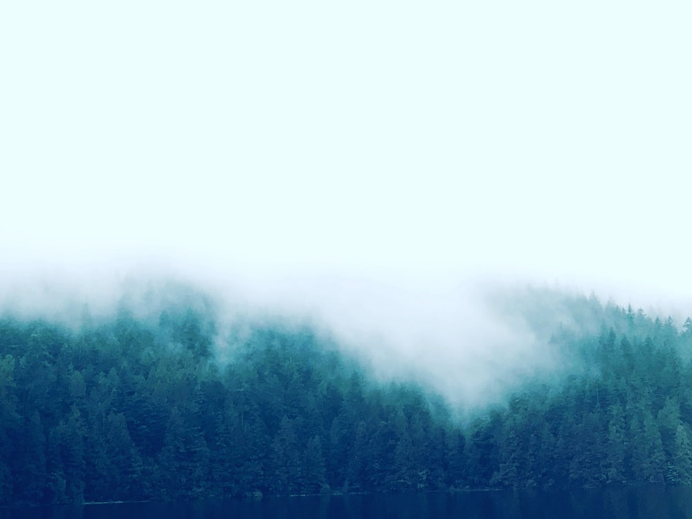 green trees under fog