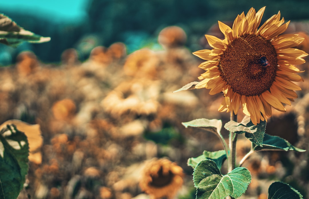 Been meets sun flower