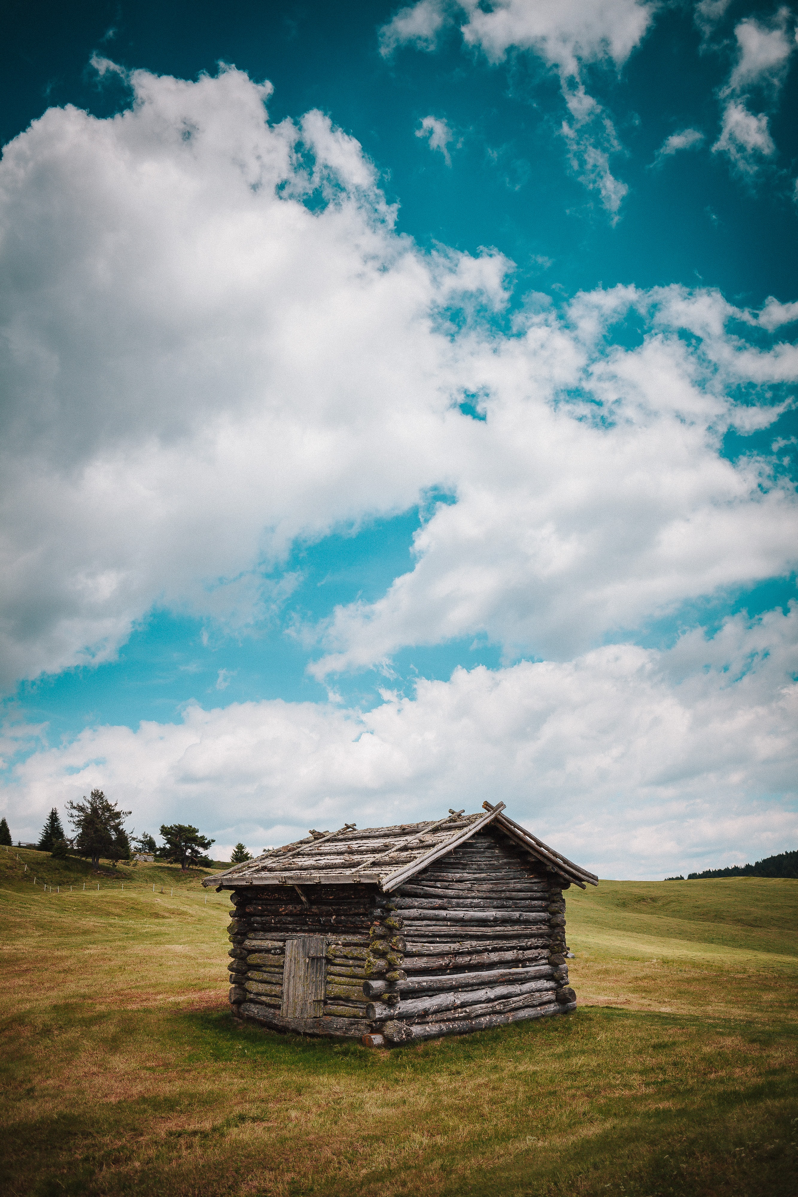 brown tree log shed on grass field
