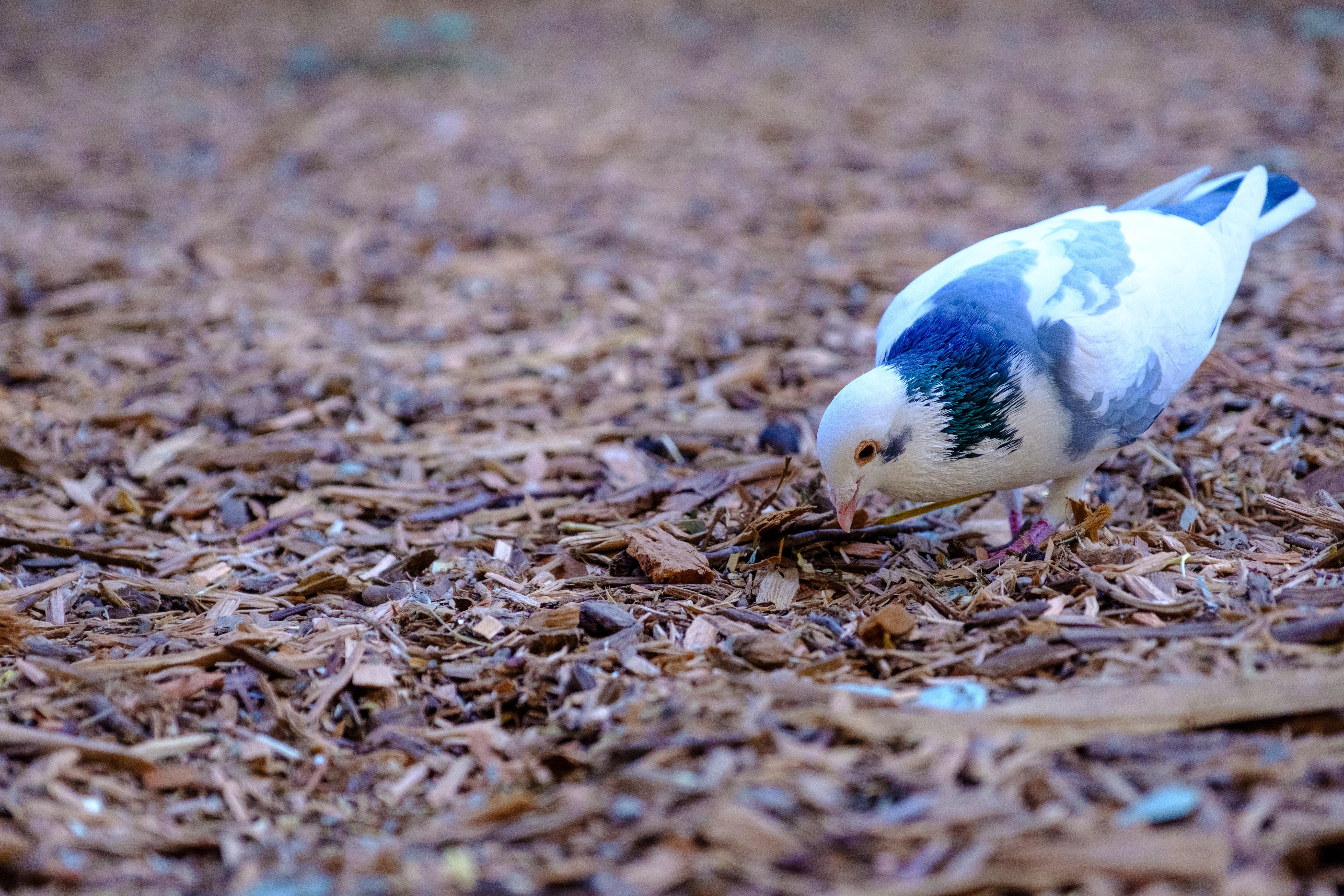 white and black bird standing on ground