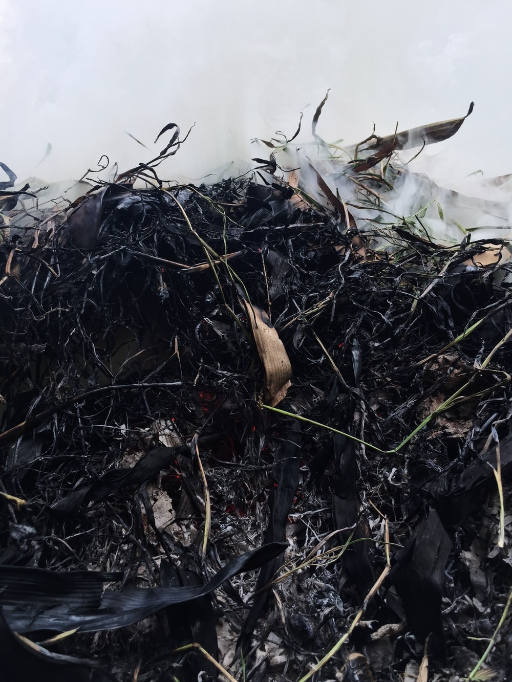 closeup photo of wilted and burned grass