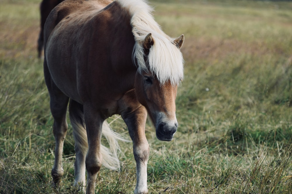 brown and white horse standing on green grass field during daytime