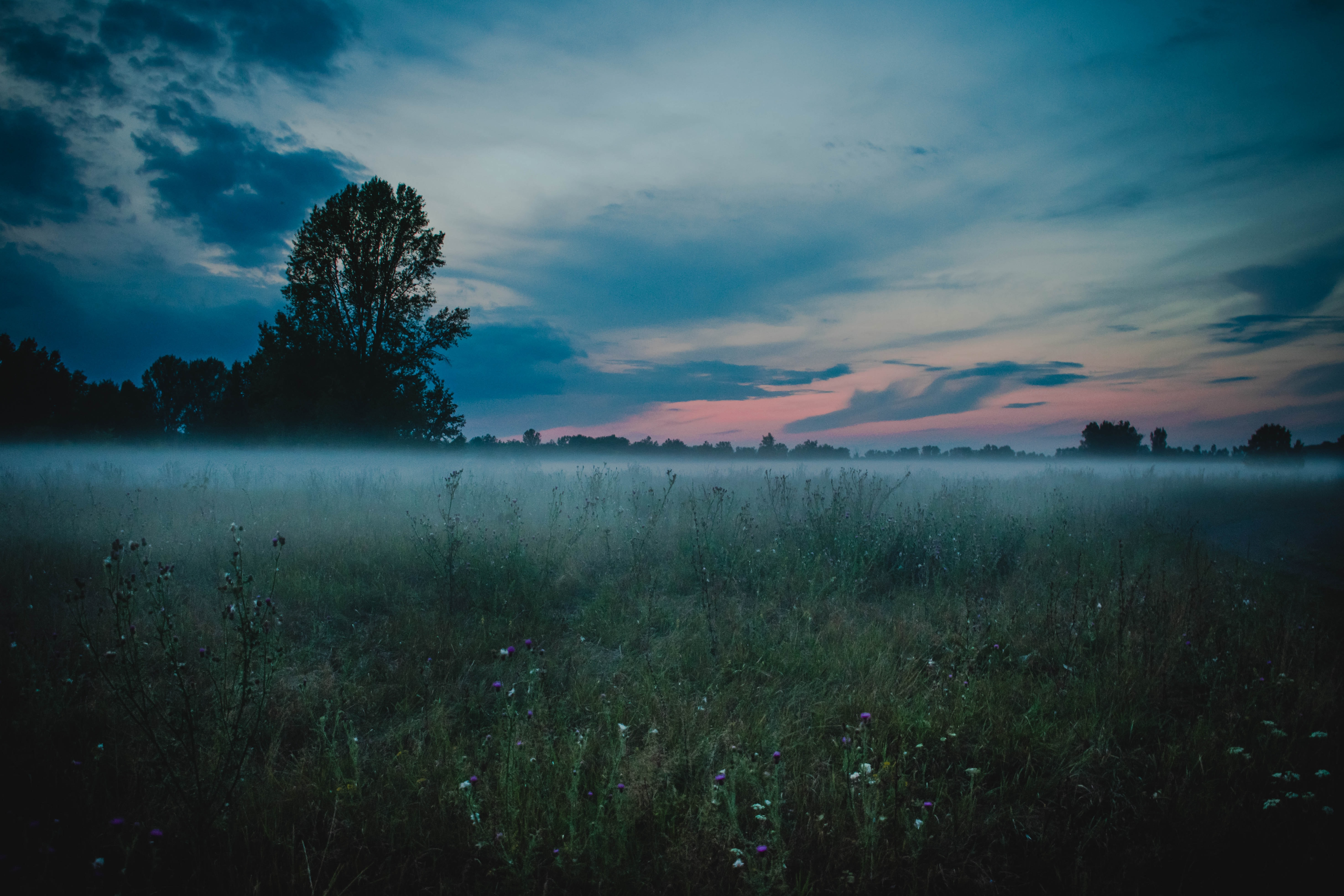 landscape photography of green field