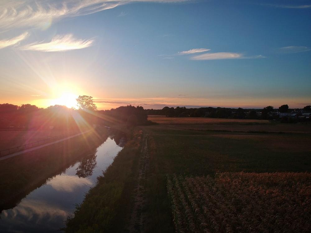 grain field during golden hour