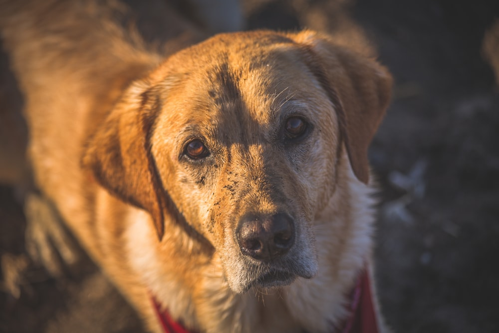focus photography of brown dog