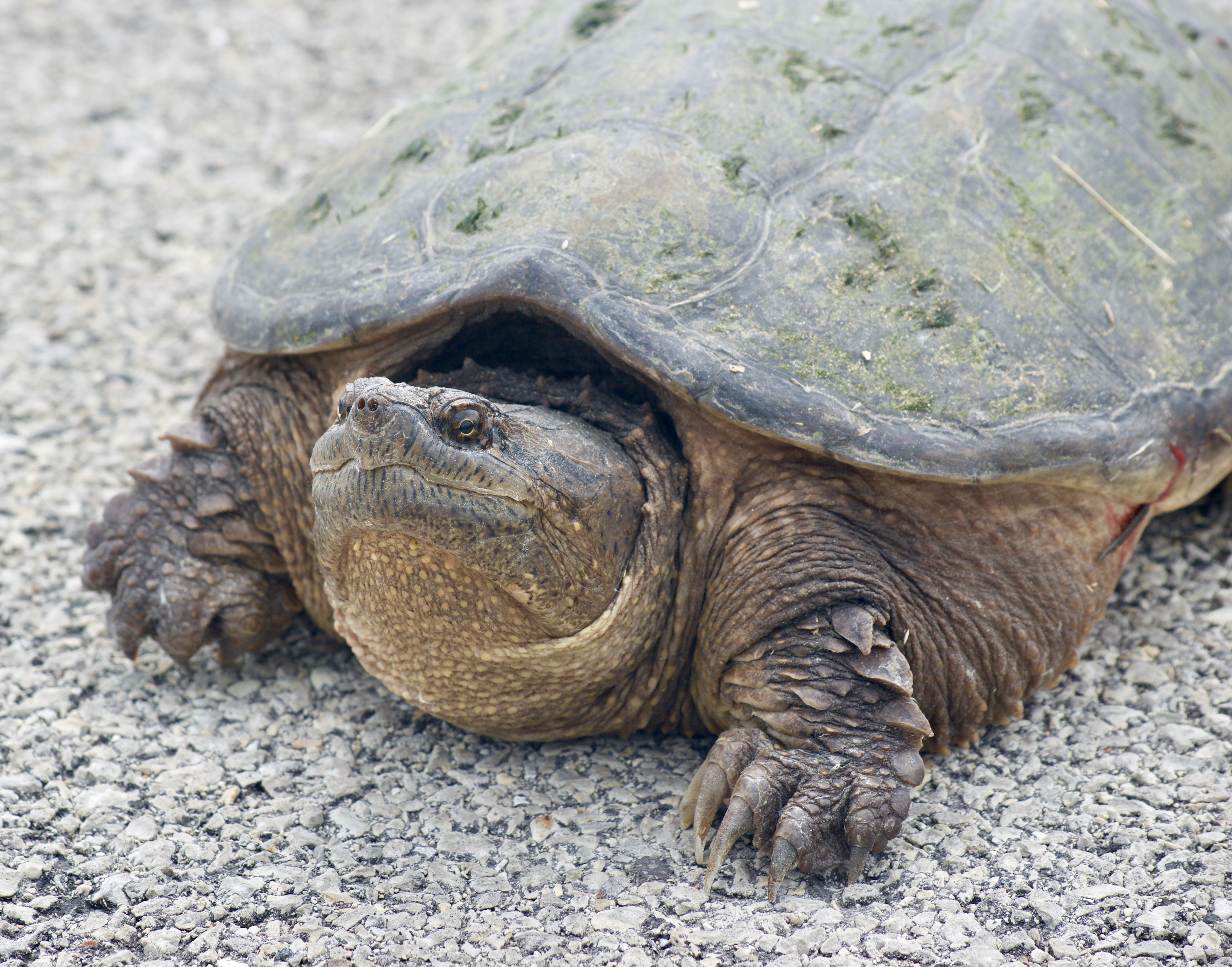 tortoise on concrete pavement