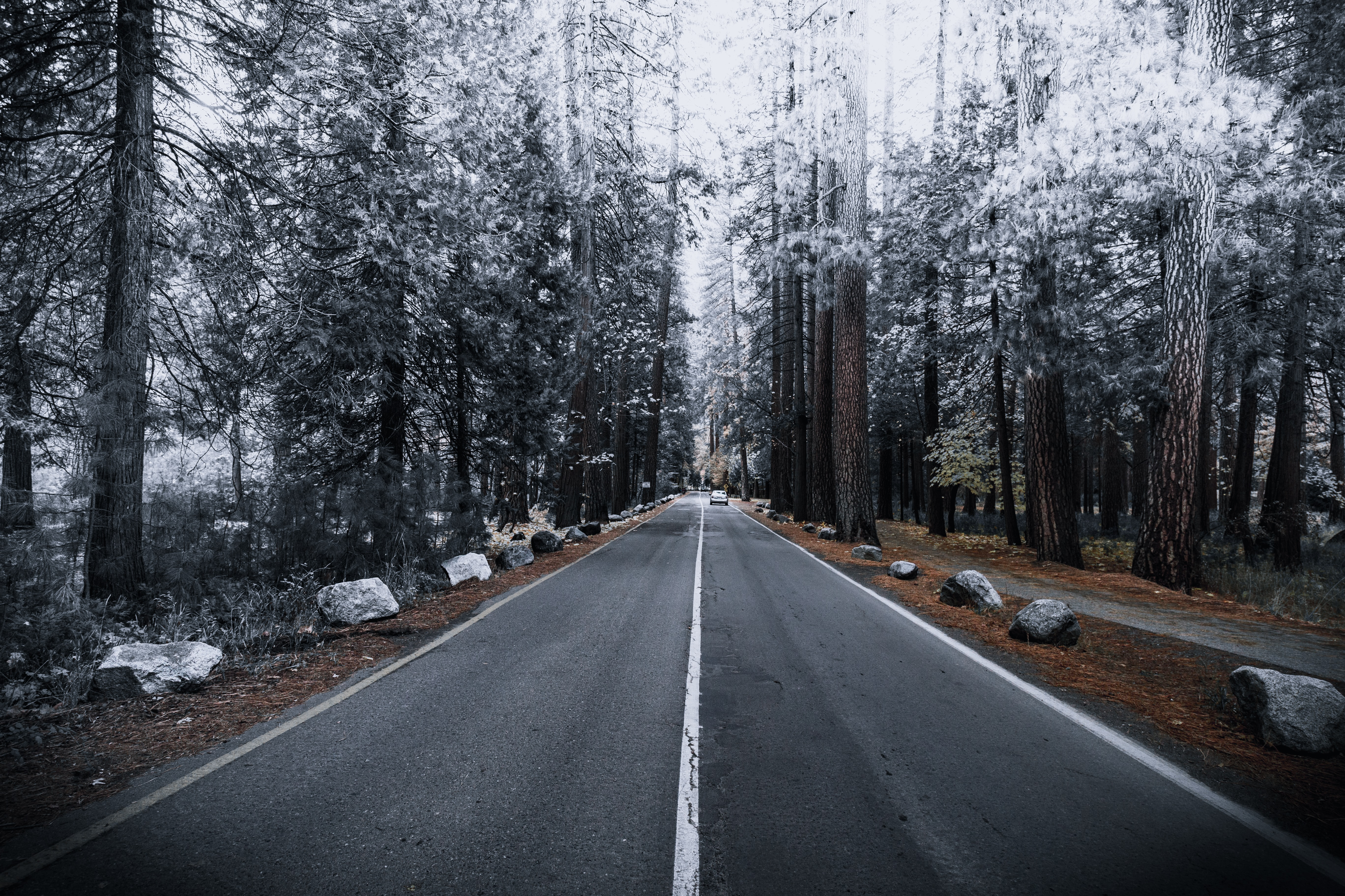 concrete road between forest