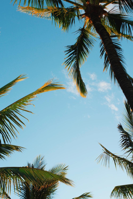 palm trees under blue skies