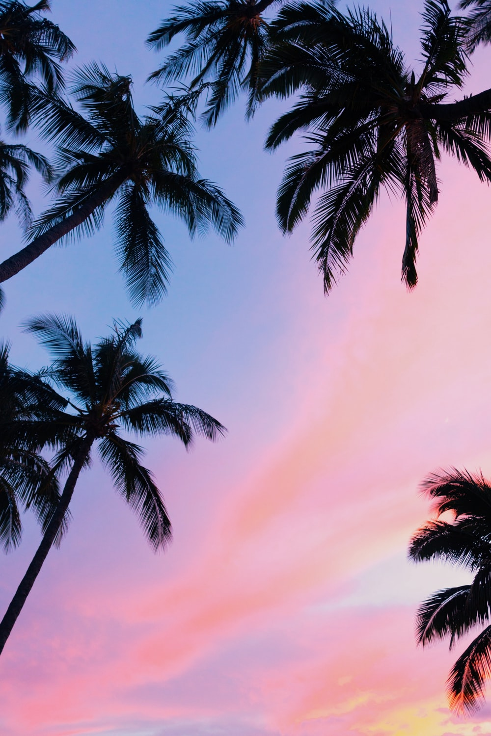 low-angle photography coconut trees during golden hour