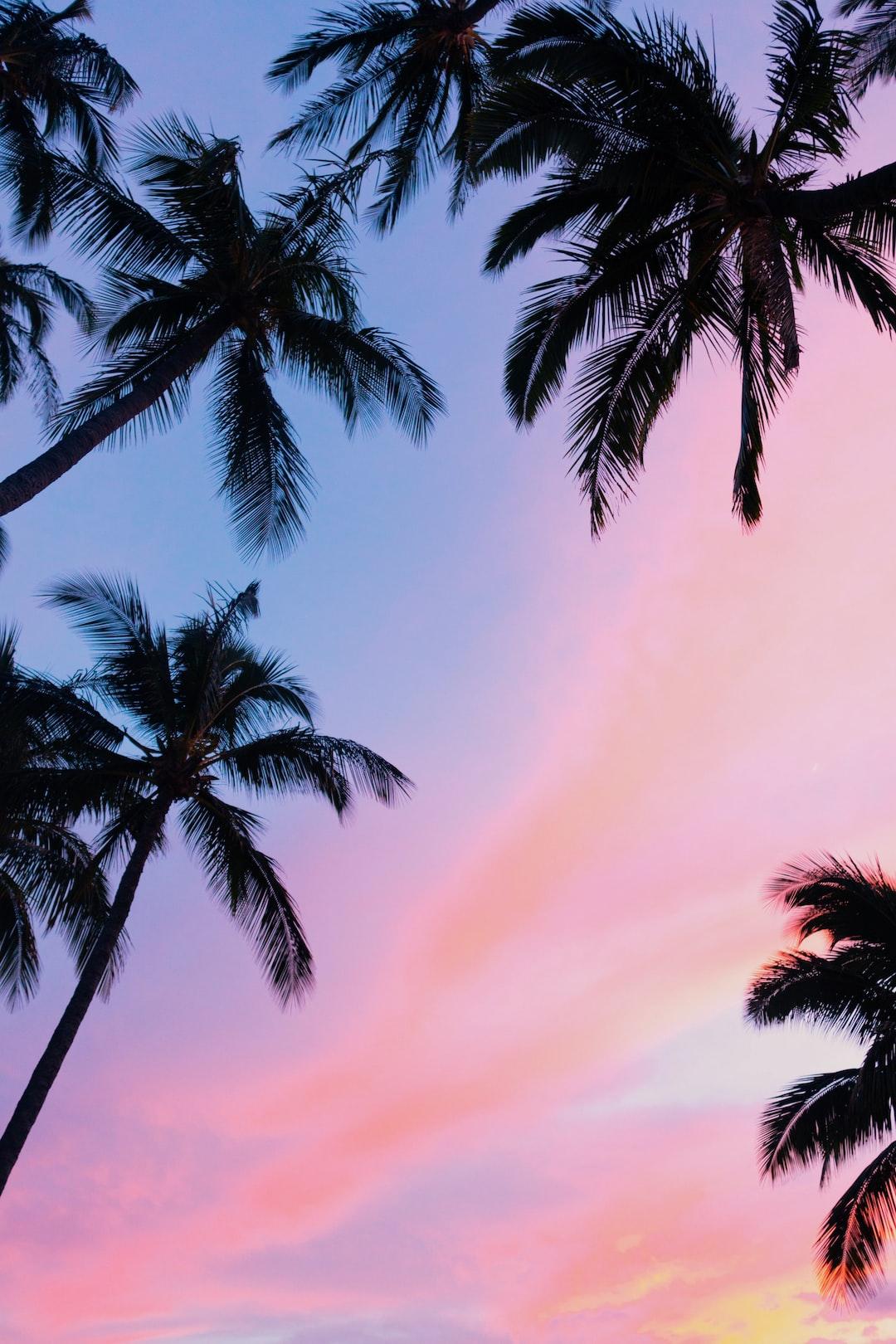 Hawaii Christmas Trees