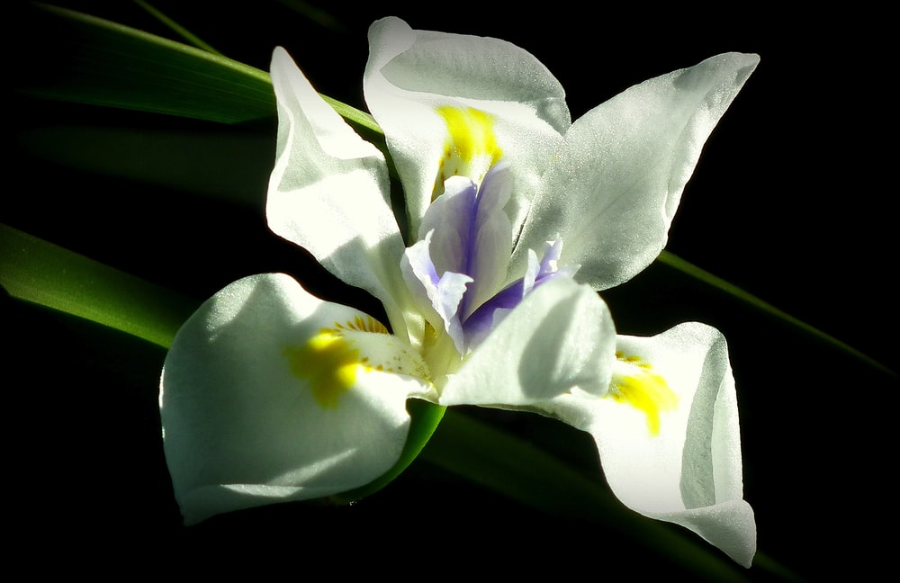 close-up photography of white petaled flower