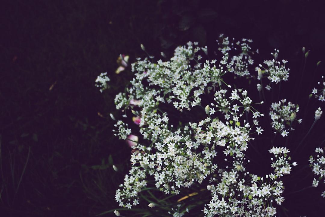 3907. Virágok