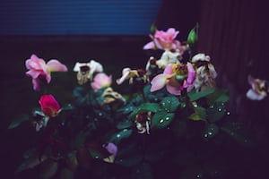 3938. Virágok