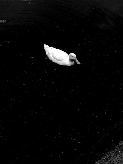 #Il prezzo della solitudine e l'illusione della parità