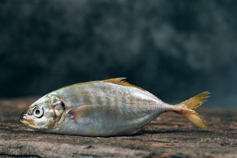 silver fishe