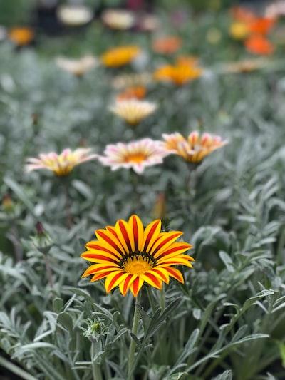 3860. Virágok