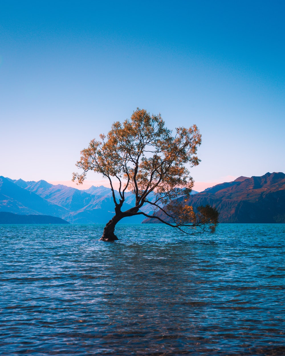 Wanaka Tree Pictures Download Free Images On Unsplash Hd wallpaper lake tree trunk mountain