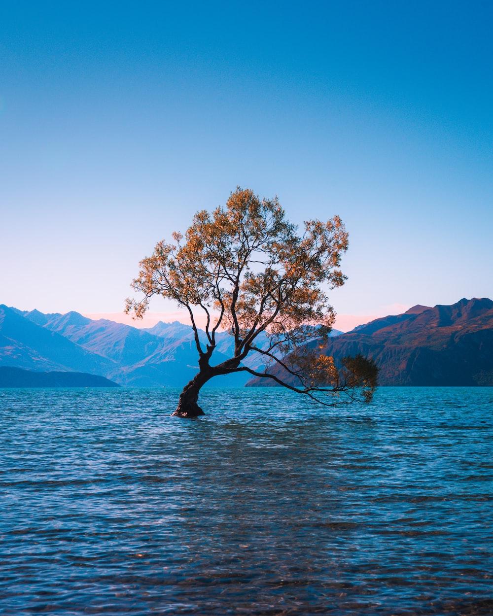 brown leaf tree at water during daytime