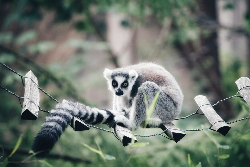 black and white animal standing on hanging ladder