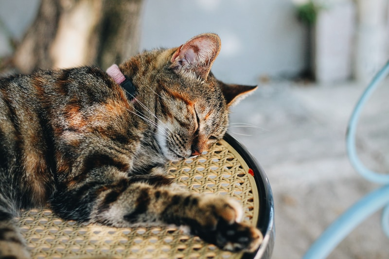 selective focus of sleeping cat on chair
