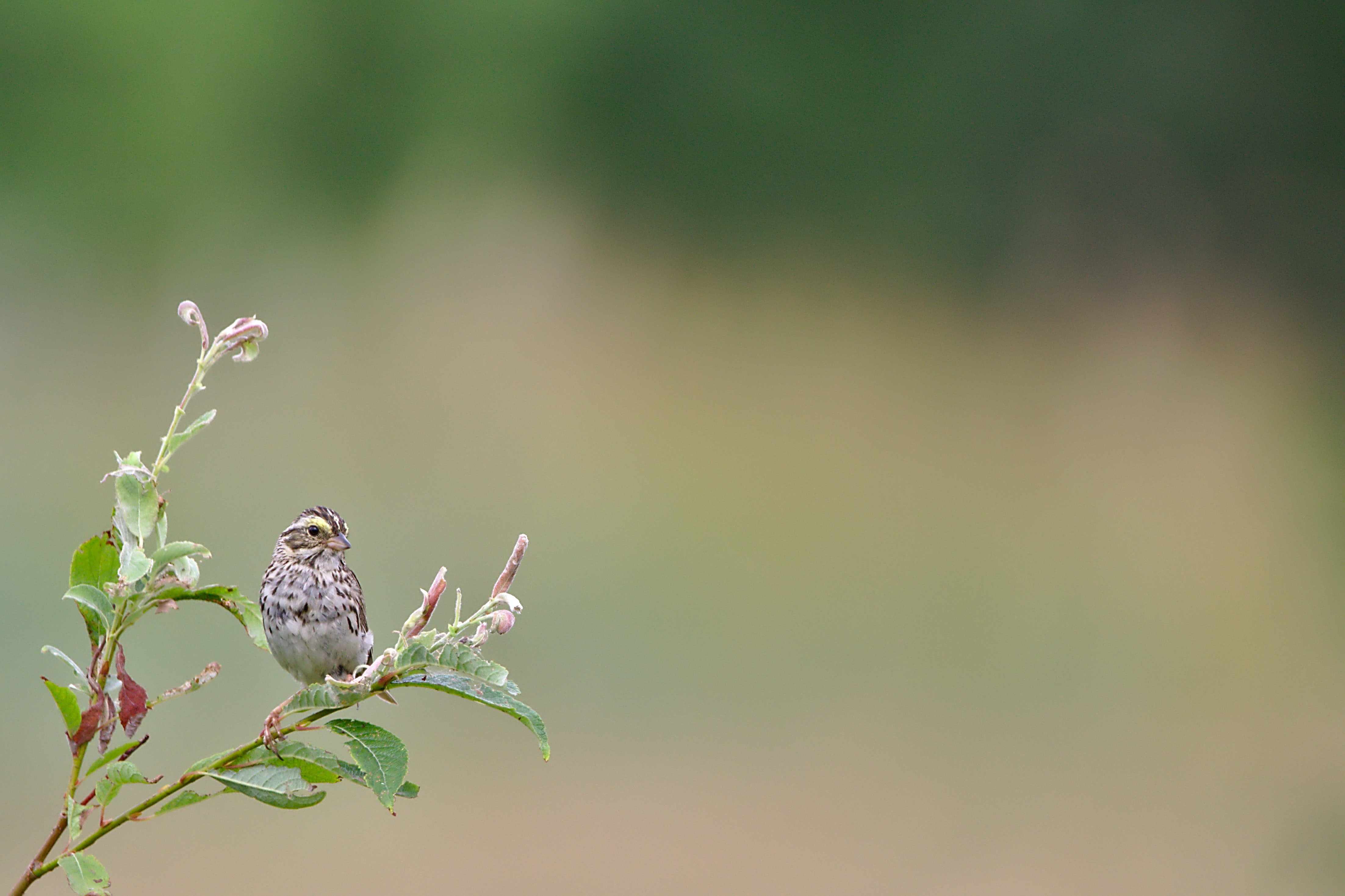 selective-focus photo of gray bird perched on branch