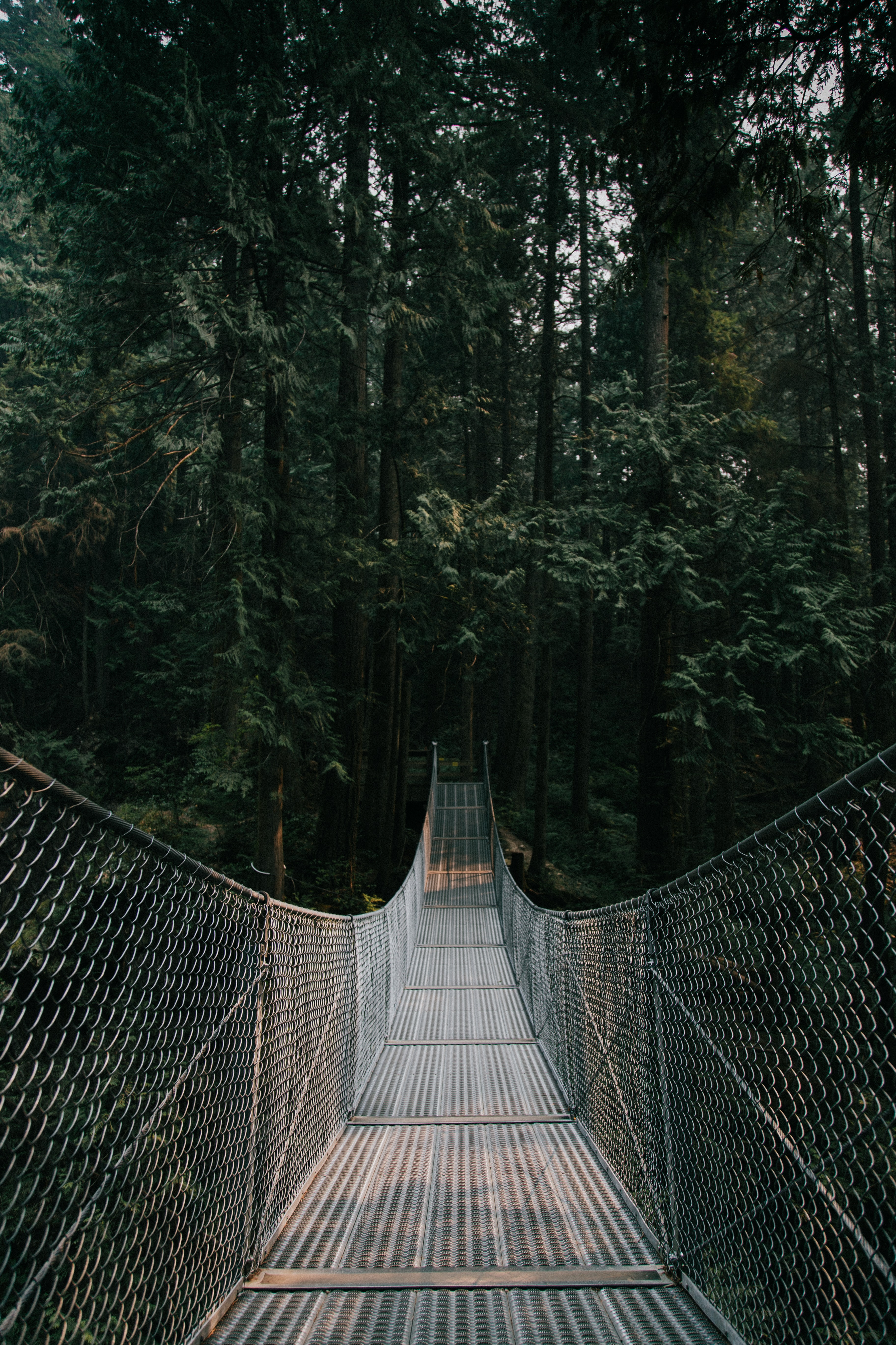gray and brown hanging bridge on between trees at daytime