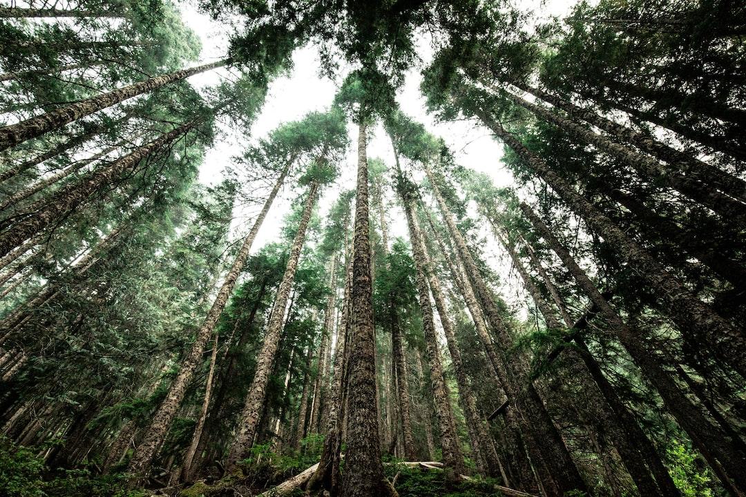 Environmental sustainabilty-Green City