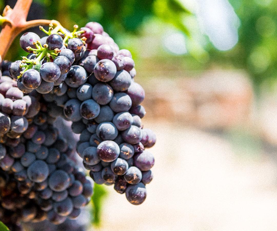 Grapes on a vine!