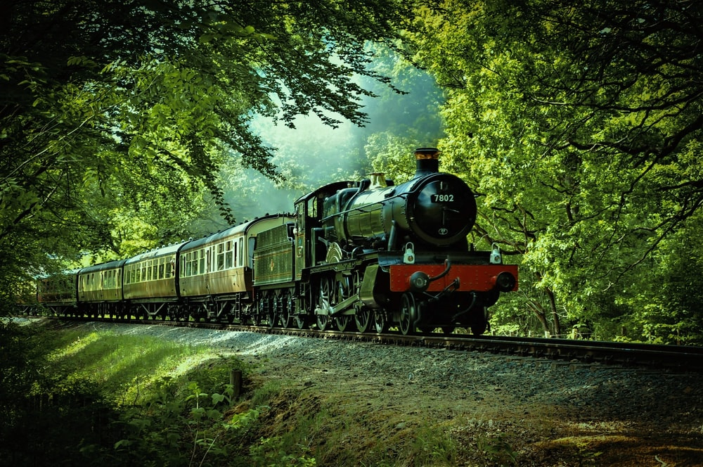black and red train passing through forest