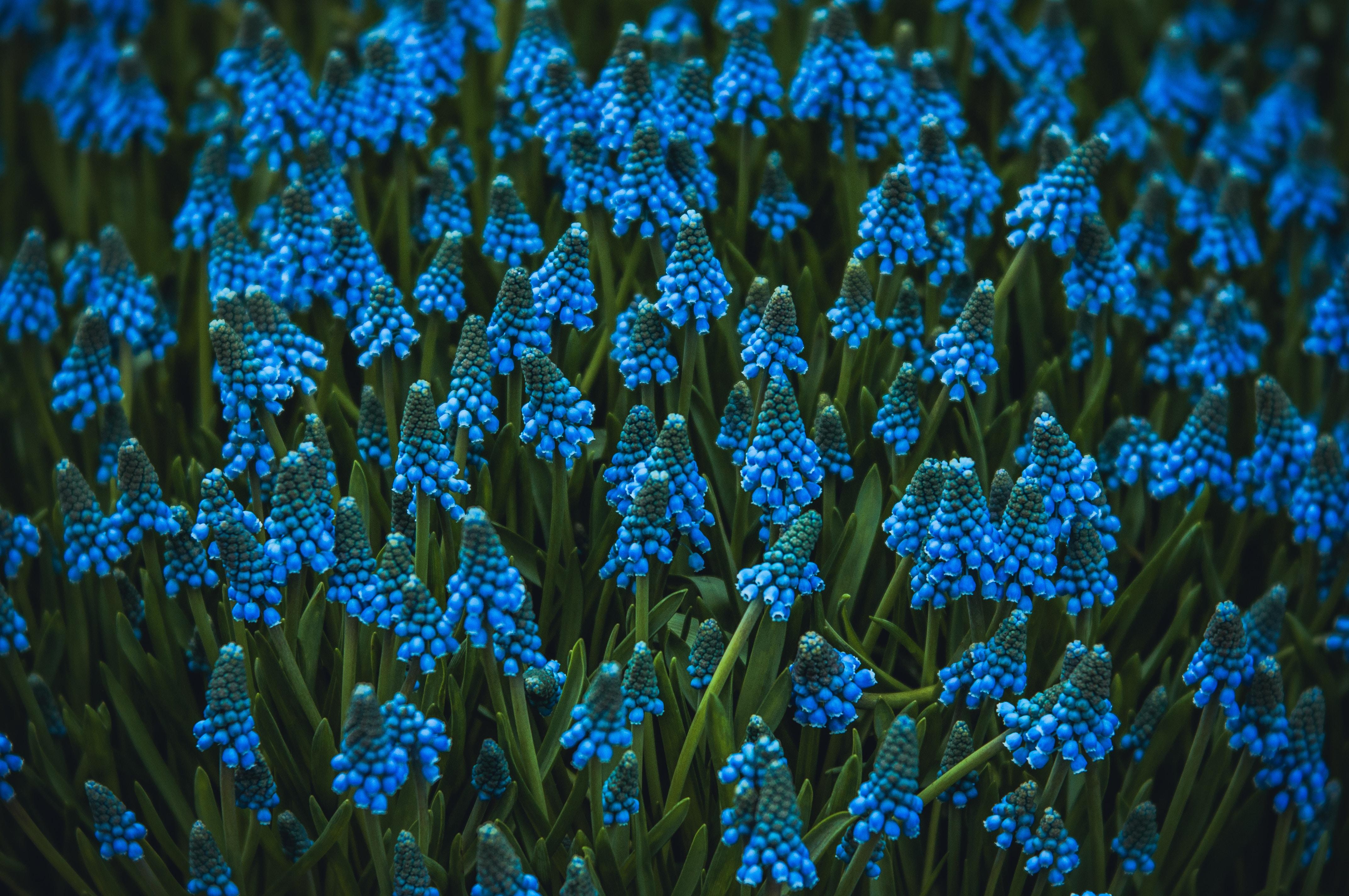 A Flower Stood stories