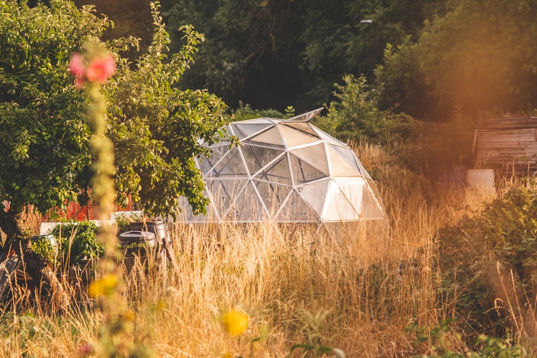 An angular hex shaped greenhouse on an allotment in Milton Keynes.