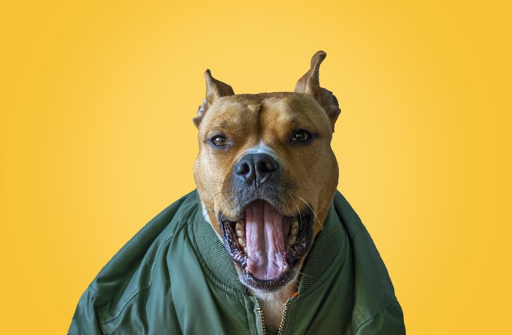 dog wearing green zip-up jacket