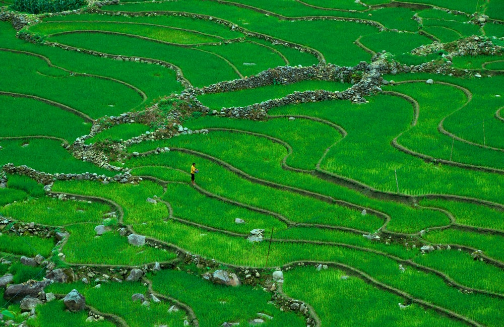 aerial photography of man standing on rice terraces field