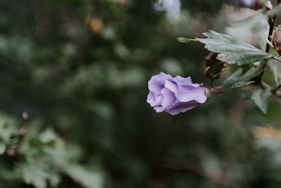 purple petaled flower leafy teams background